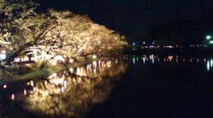 夜桜@臥竜公園